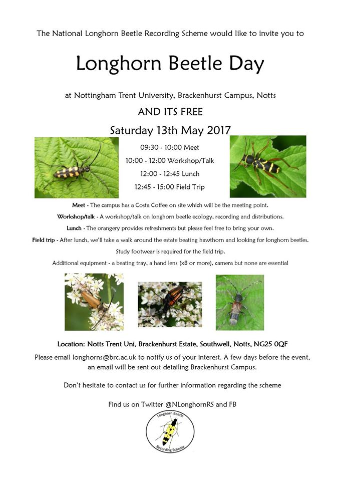Longhorn beetle workshop